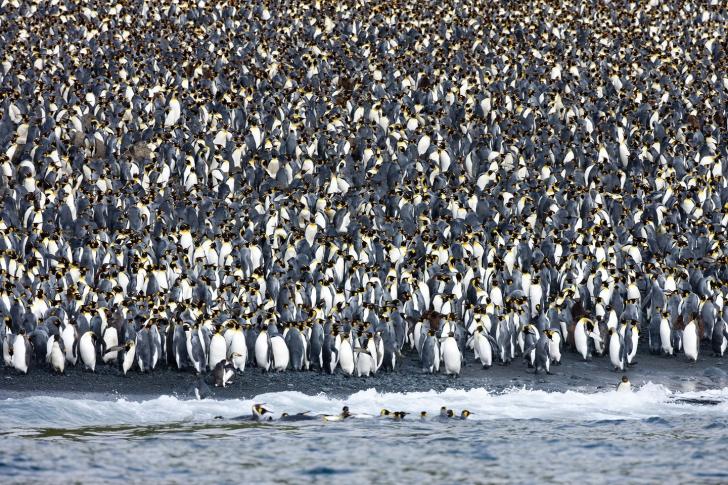 Cum arată o insulă locuită doar de pinguini. Imagini care îţi frâng inima