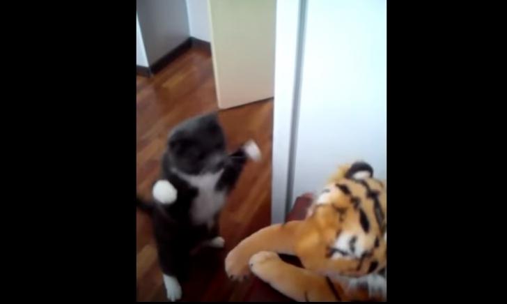 O pisică face praf un tigru. Rezultatul e uluitor. Imaginile au ajuns virale pe Internet