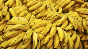 <p>Efectele miraculoase ale bananelor asupra organismului. Sigur nu ştiai acest lucru!</p>