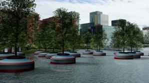 Pădure plutitoare