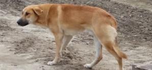 """A salvat un câine de la moarte apoi a postat un mesaj cutremurător pentru """"stăpân"""": Te-a aşteptat..."""