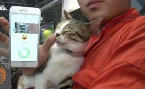 Starea de spirit a animalului de casă, pe iPhone