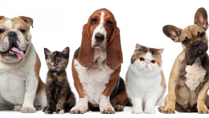 Mulți facem această greșeală. 4 alimente pe care să NU i le mai dai niciodată câinelui sau pisicii