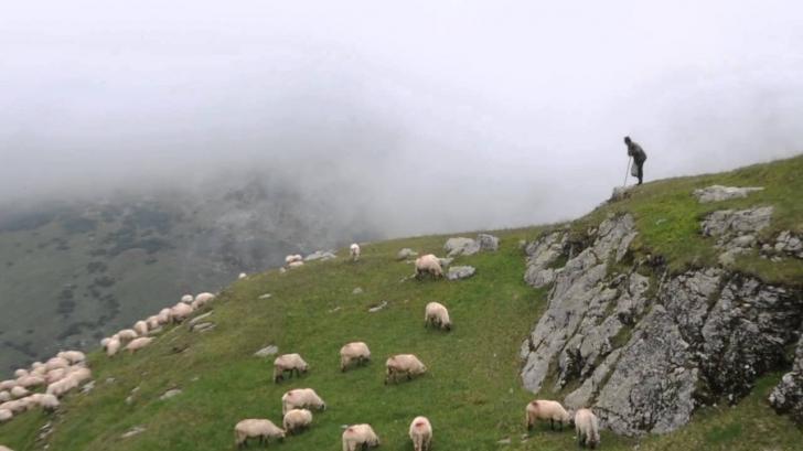 Un cioban a omorât, cu mâinile goale, un ciurdar! L-a lovit cu o violență ieșită din comun