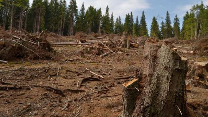 Ministrul Mediului,declaraţie şoc:Fenomenul tăierilor ilegale de pădure nu este atât de grav,dacă...