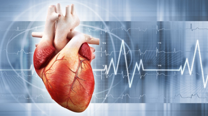 12 curiozităţi despre inimă pe care trebuie să le afli