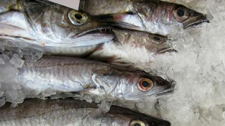 Filmuleţul care a isterizat internetul: un peşte îngheţat, readus la viaţă - VIDEO