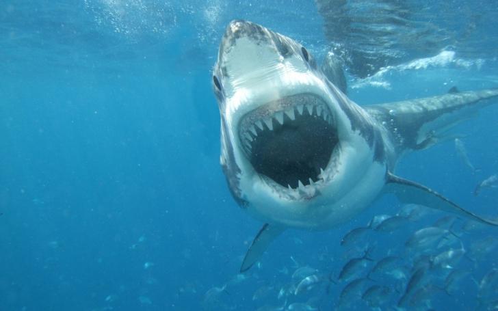 Imaginea care a scandalizat internetul. Acesta este rechinul care a reuşit să uimească toată planeta