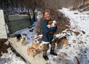 A salvat de la moarte 200 de căţeluşi. I-a adoptat de toţii. Iată cum trăieşte această femeie!