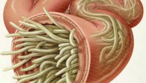 Teorie şocantă: Dacă acest parazit este distrus, evoluţia cancerului se va opri imediat
