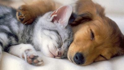 Ce înseamnă când visezi animale. Câinii prevestesc fericire conjugală
