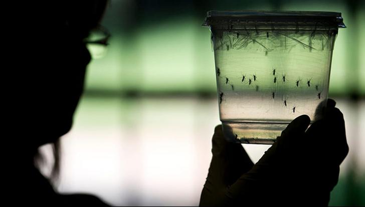 Președintele SRM: Virusul Zika nu reprezintă în prezent niciun pericol pentru România