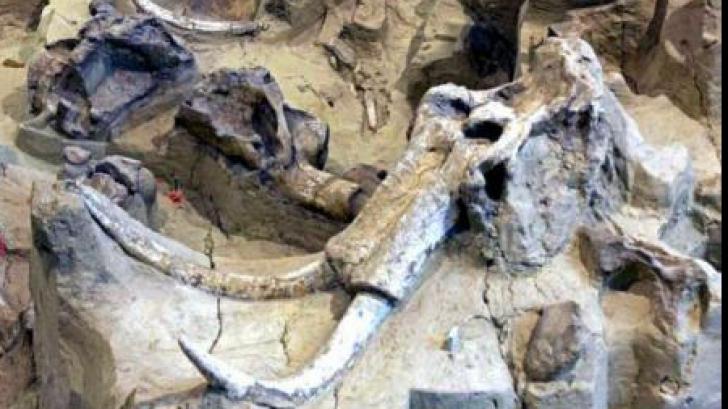 Descoperire incredibilă în Pakistan! Are peste un milion de ani vechime