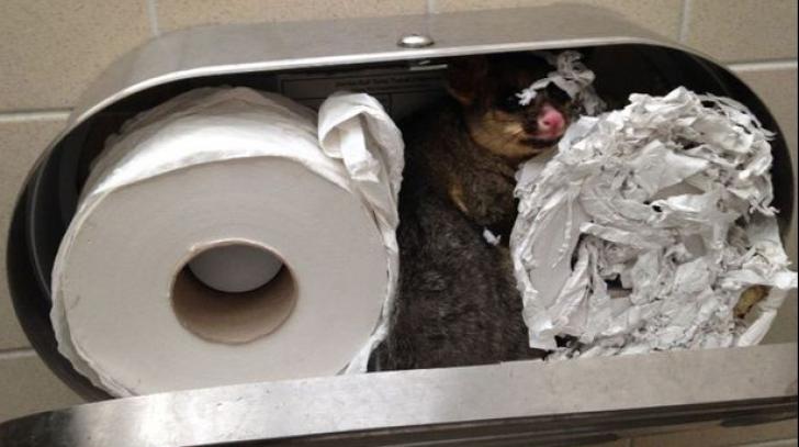 A vrut să monteze un dulap nou în baie, dar când l-a deschis pe cel vechi a înlemnit. Ce era în el