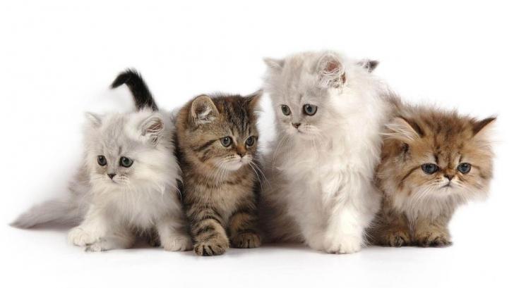 Renunță la greșeala pe care mulți stăpâni de pisici o fac. Unde să-i pui bolul cu apă