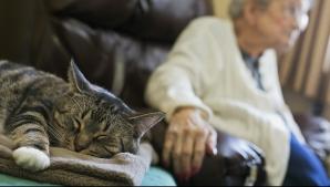 Oscar, pisica morţii