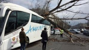 Vântul puternic face ravagii în Capitală. Un copac a căzut peste un autocar aflat în mers