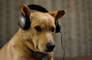 """Consilierul din Mediaș """"loveşte"""" din nou: câinii să latre noaptea în casa stăpânului, nu în curte"""
