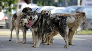 Fetiţa de 8 ani sfâşiată de câini, în Iaşi