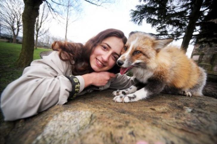 O vulpe se crede câine. Cum se comportă animalul în captivitate, în compania stăpânei