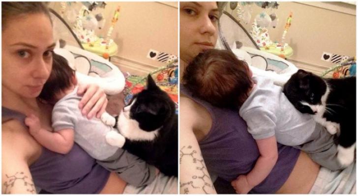 """Această pisică s-a """"îndrăgostit"""" de bebelușul din burta mamei. Ce a urmat după naștere e fantastic"""