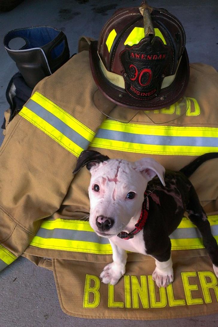 """Povestea emoţionantă a acestui patruped: a fost salvat dintr-un incendiu, apoi a devenit """"pompier"""""""