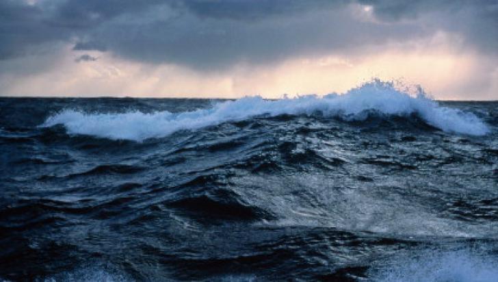 Descoperire uluitoare în adâncurile Oceanului Pacific. Seamănă cu o fantomă