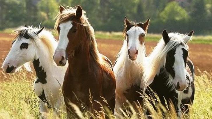 Paştele Cailor chiar există! De unde vine această expresie