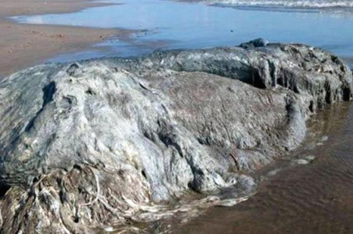 Monstru marin eşuat pe o plajă. Nimeni nu ştie ce este