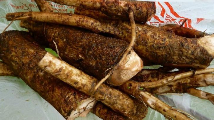 Rădăcina care reduce glicemia, protejează ficatul de toxine și reduce colesterolul