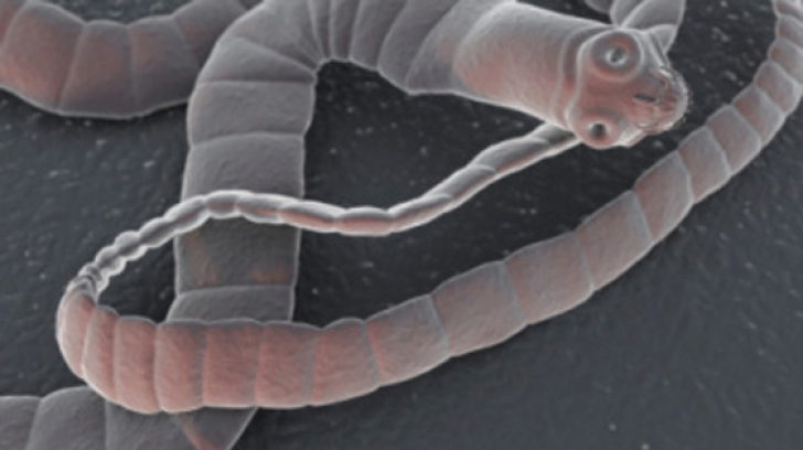 Viermele ce îți poate invada creierul. Cum poate ajunge în organismul tău, din alimentele infectate