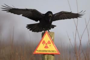 30 de ani de la dezastru de la Cernobîl. Cum arată acum zona contaminată