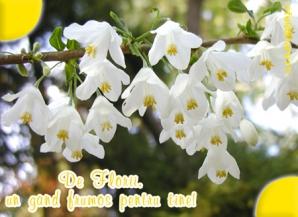 Felicitări FLORII Facebook. Cele mai frumoase poze cu flori pentru cei cu nume de floare