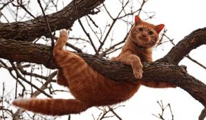 O pisică a sărit de la 18 m şi a supravieţuit. Dacă pica de la 12 m, nu avea nici şansă. De ce?