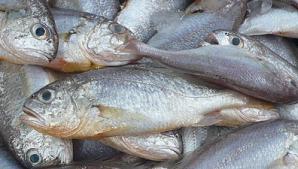 Iată cum poţi fi minţit de către vânzător când cumperi peşte din pieţele alimentare