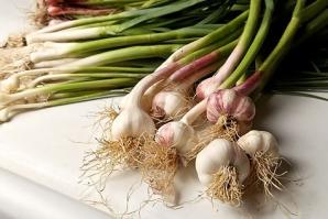 Ce se întâmplă în organismul tău dacă mănânci usturoi verde. Acum că ştii, mai consumi?