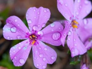 Vreme instabilă, cu temperaturi în scădere și ploi aproape zilnic. Prognoza pe două săptămâni