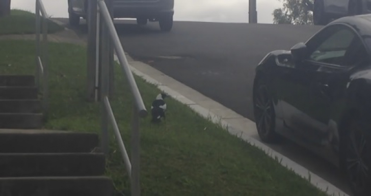 Îşi găsea mereu maşina zgâriată în parcare. A montat o cameră video. Ce a aflat l-a lăsat mască