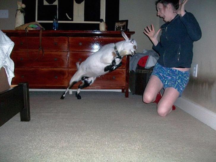 Imagini spectaculoase: fotografii surprinse la momentul potrivit. Vei râde cu lacrimi!