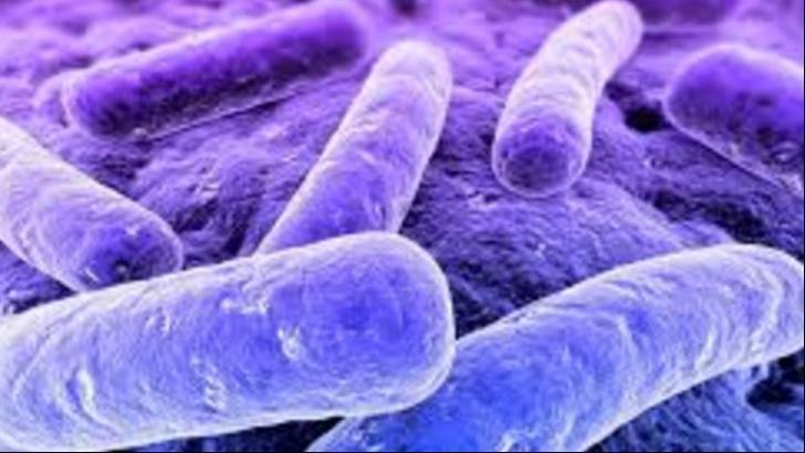 Fa cunostinta cu bacteriile bune din intestin! | printreoale.ro