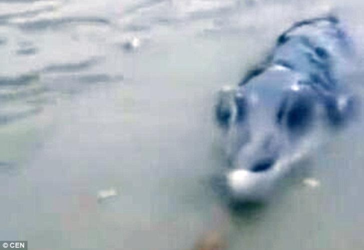 Un pescar a tras de undiţă până când a rămas şocat ce ieşea din apă! Te ţine să te uiţi la imagini?