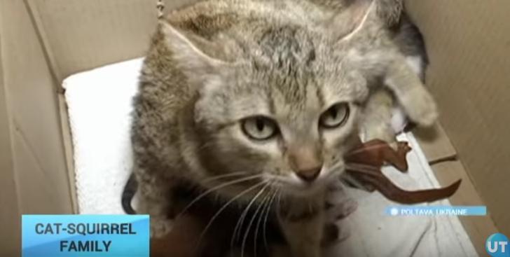 Imagini adorabile: o pisică a adoptat doi pui de veveriţă