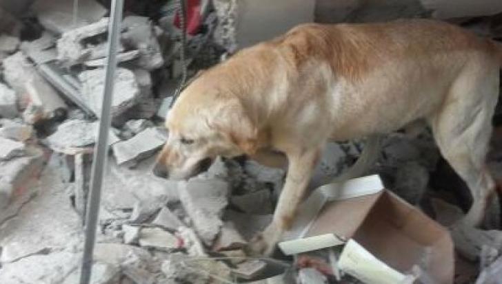 Cutremur Ecuador: Câinele Dayko a murit de epuizare după ce a salvat 7 persoane