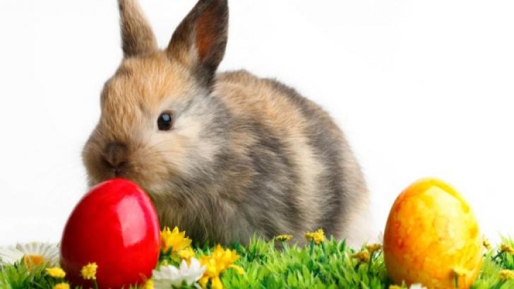 PAŞTE 2016. Cele mai ciudate tradiţii de Paşte: femeile sunt biciuite, iar iepuraşul este animal rău