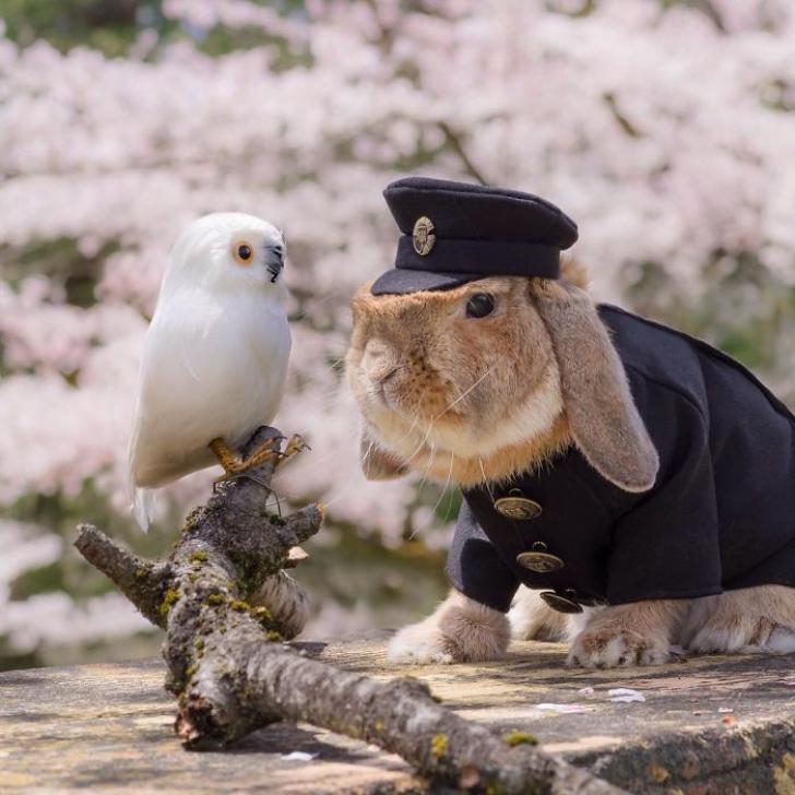 Cel mai funny iepuraş, în ţinute la modă