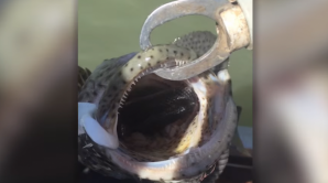 """Erau la pescuit şi au prins un cod. Când peştele a deschis gura, au înlemnit. """"E încă viu!"""". VIDEO"""