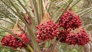 Fructul care ne ajută să scapăm de durerile de stomac. Şi medicii se uimesc de efectele lui