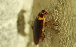 Cum scapi de gândacii de bucătarie DEFINITIV. 5 soluţii pe care le poţi aplica imediat