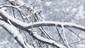 Fenomen meteorologic ciudat. În acest oraş a nins pentru prima oară în ultima jumătate de secol