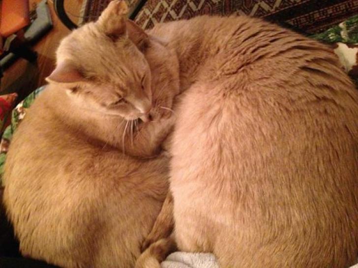 Un veterinar a luat acasă o pisică bolnavă. După 3 ani a descoperit ceva șocant. Totul s-a schimbat